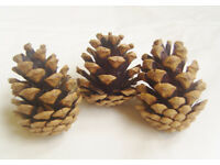 Box of Pine Cones. Free Delivery in Brentwood