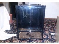 Glass 60cm vivarium