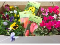 Winter plant box