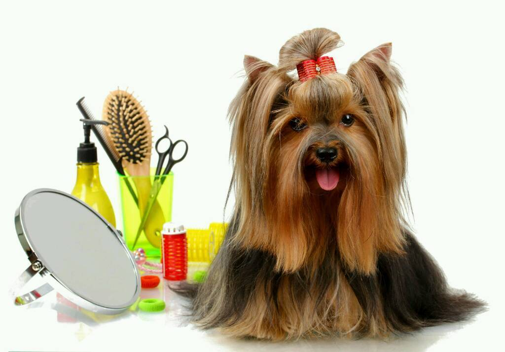 Dog Grooming And Other Pets Home Visits Only Most Animals And Pets