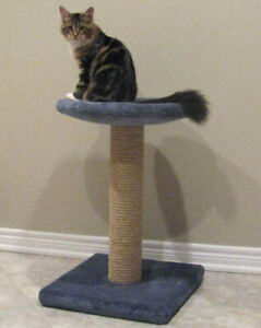 Looking for a Cat tree