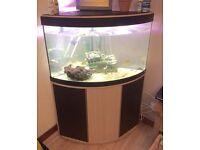 Fishtank 195L corner tank