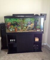 65 gallon fish aquarium with fish & accessories