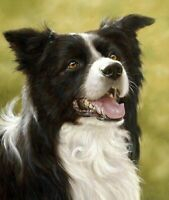 Canvas Pictures Of Dogs