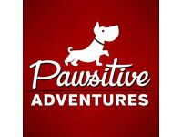 Dog Walker, Pawsitive Adventures , accredited professional dog walker/pet sitter in Dundee