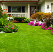 MOWING STARTING FROM $50.00 Coomera Gold Coast North Preview