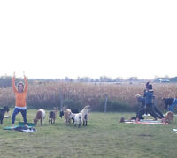 All Ages Sunday Goat Yoga Sessions 4pm