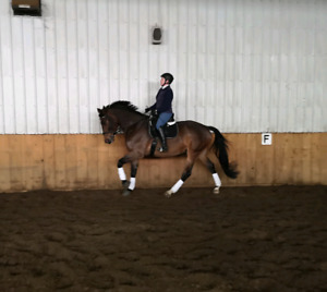 Awesome dressage horse for lease!!