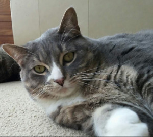 Free male cat to loving home only