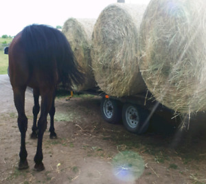 Hay Transport Available