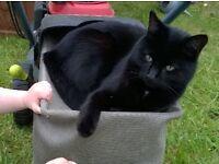 missing /lost black cat