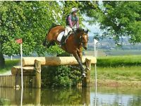 Horse and pony schooling livery
