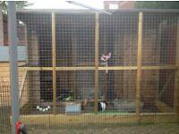 Rabbit enclosure/ hutch and run