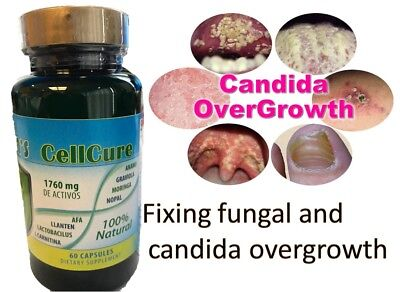 Potent Candida Cleanse  Yeast Infection Treatment And Detox With Herbs  Enzymes