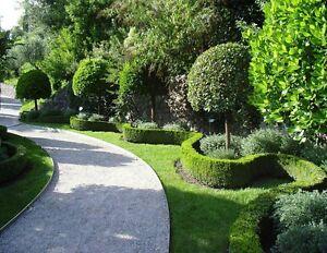 Landscape Gardeners Assistant Bondi Junction Eastern Suburbs Preview