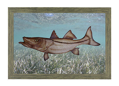 Solid-Faced Canvas Print Wall Art entitled Cruising the Shallows Muskie