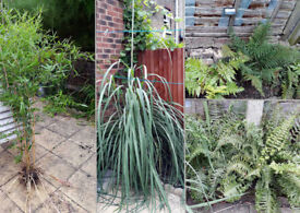 big garden plants for sale
