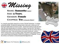 Missing Female tabby cat/3 white socks and a white boot on back leg .