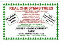 REAL CHRISTMAS TREES FOR SALE Nordman. Frazer.