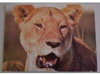 Lion 500 Piece Jigsaw Puzzle - No Box