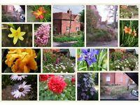 Garden Maintence Services