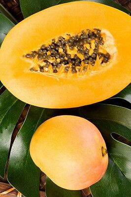 Mango Papaya Soap / Candle Making Fragrance Oil 1-16 Ounce **Free Shipping** (Papaya Scent Candle)