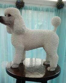 White Poodle Ornament