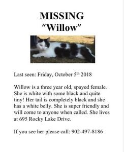 MISSING KITTY!