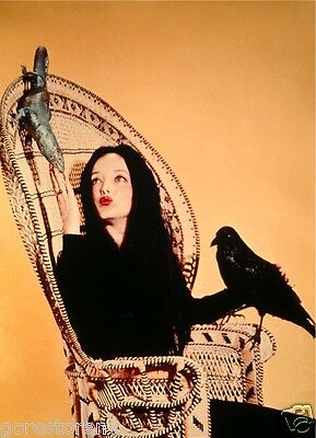 THE ADDAMS FAMILY TV Poster Morticia  Addams Family-tv