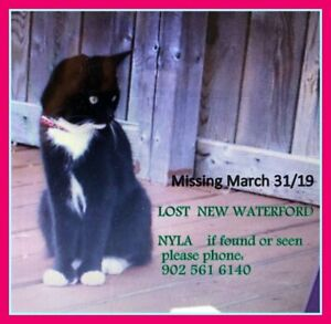 LOST CAT NYLA very loved  family pet female