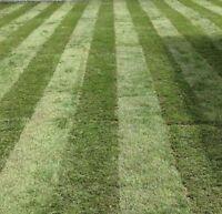 Core Aeration, Rolling & Lawn Maintenance