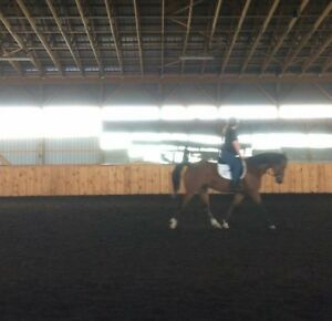 Gelding for Part Board Sarnia