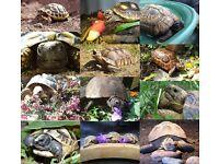 Tortoise Protection Group Calendar 2017
