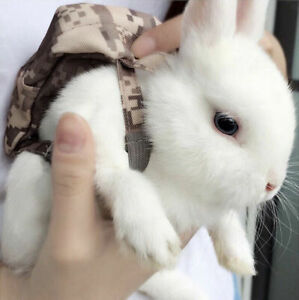 Netherland Dwarf bunny for Rehoming