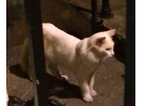 White cat found Westbourne Grove area