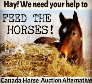 PLEASE HELP FEED THE HORSES!!