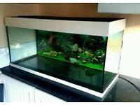 1m Jewel fish tank