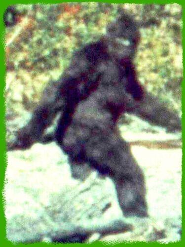 "4.5"" RARE! 1967 Patterson REAL Bigfoot vinyl sticker. Classic Sasquatch decal."