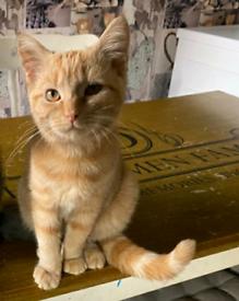 Rare, beautiful female kitty