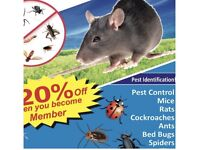 Pest control bedbugs mice rat cockroaches flies fleas mouse removal exterminator