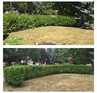 Professional Hedge Trimming (613) 483-7058