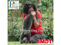 IMDT Certified Dog Trainer, London