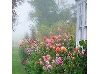 Top Gardeners - Full gardening and landscaping services provided.
