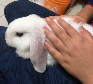 most adorable bunny for sale