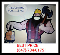 Tree removal tree cutting.. .. $100.... 647-794-0175