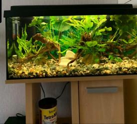 Fish tank with full setup