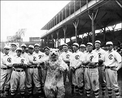1908 Chicago Cubs Photo 8X10 Mascot World Series Champions  Buy Any 2 Get 1 - Buy Mascot