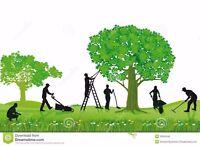RJ Garden maintenance