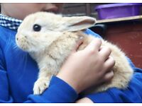Lovely friendlybunnies looking for a new loving home