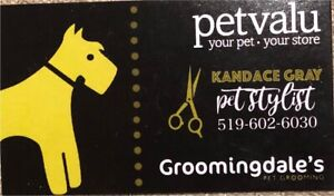Trusted Local Dog Groomer